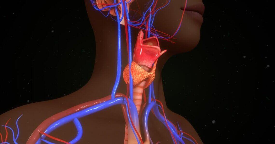 hashimoto-thyreoiditis-ernährung-ernährung-bei-hashimoto-ernährungsplan-bei-hashimoto-min