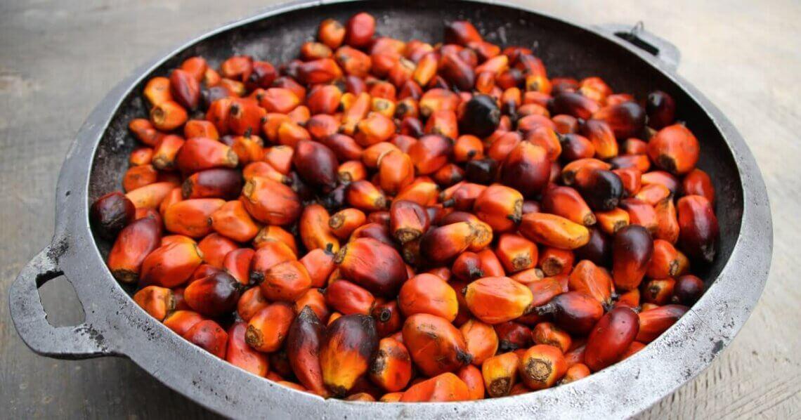Was ist Palmöl?