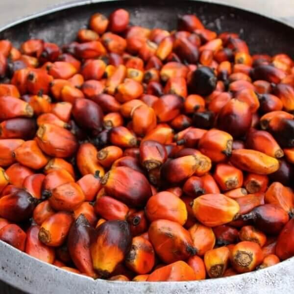 Was ist Palmöl - Ist Palmfett gesund oder ungesund?